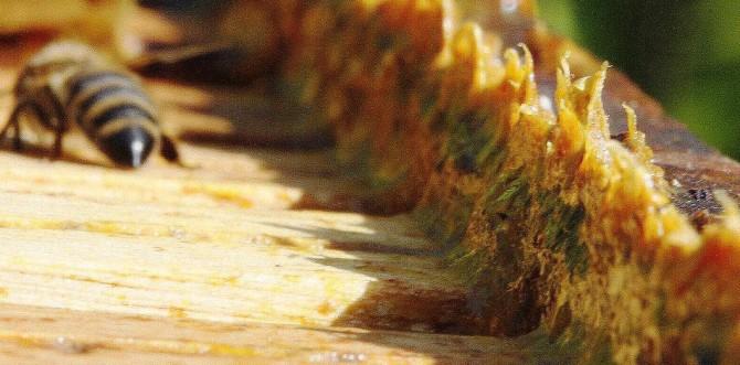 Health benefits of Propolis or Bee glue