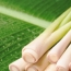 Health benefits and medicinal properties of Lemongrass