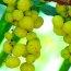 Health benefits of Amla  / Amalaki / Indian Gooseberry