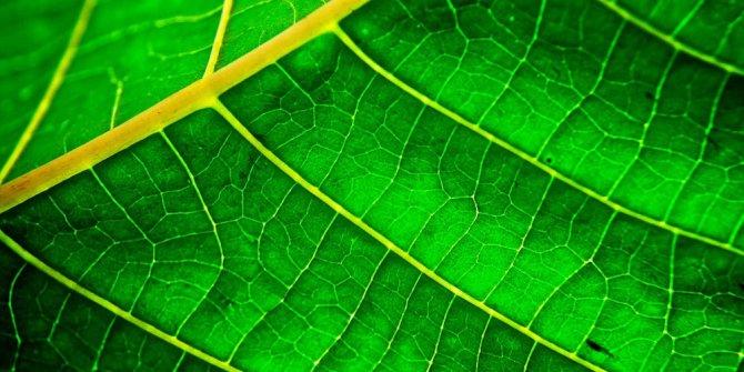 Health benefits of Chlorophyll