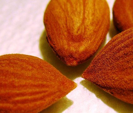 health benefits of apricot seed