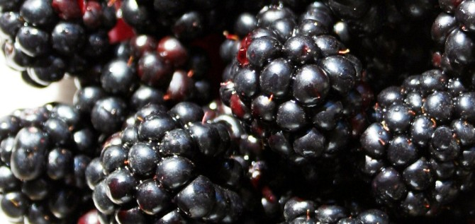 Health benefits for blackberries