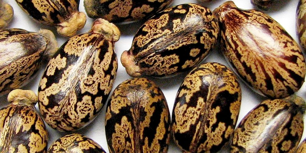 health benefits of castor seed oil