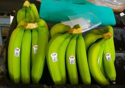 green bananas in market