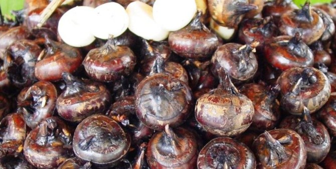 Health benefits of chinese water chestnut