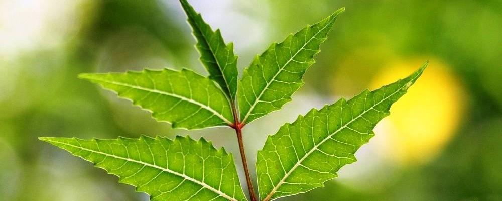 Benefit of neem leaves