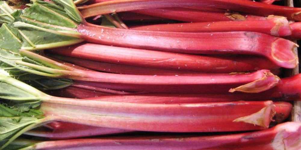 Health benefits of Rhubarb