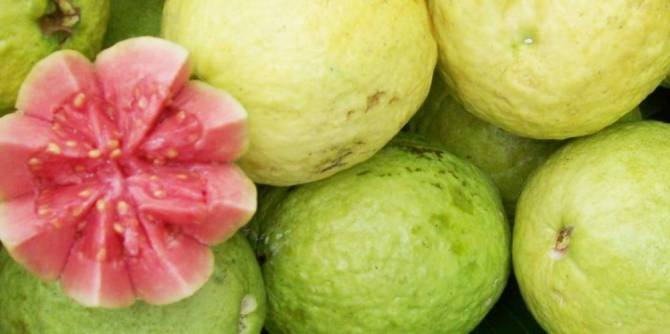 Amazing benefits of Guava