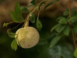 kath beal on tree