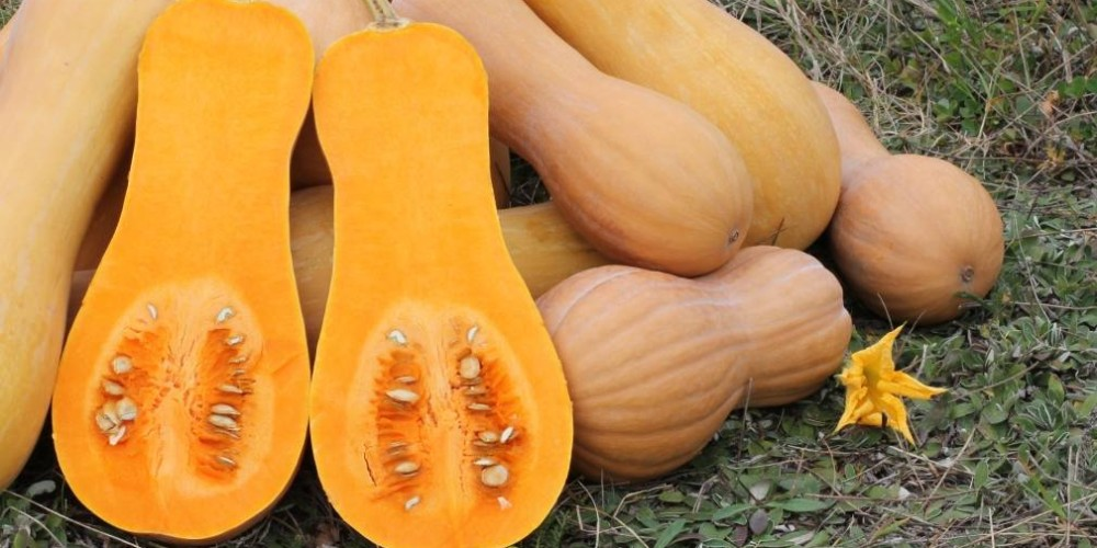 Health benefits of butternut squash