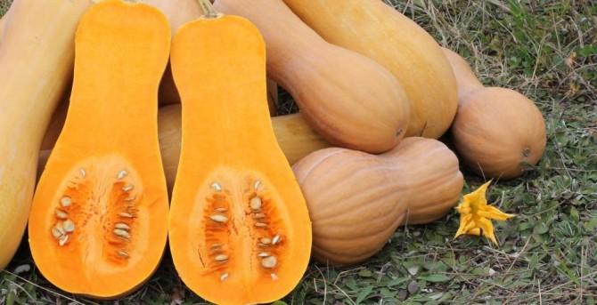 Health benefits of butternut squash
