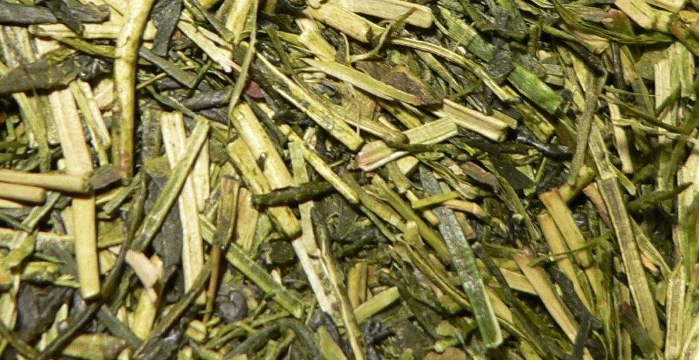 health benefits of Kukicha twig tea