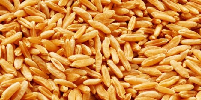 Health Benefits of kamut / Khorasan wheat