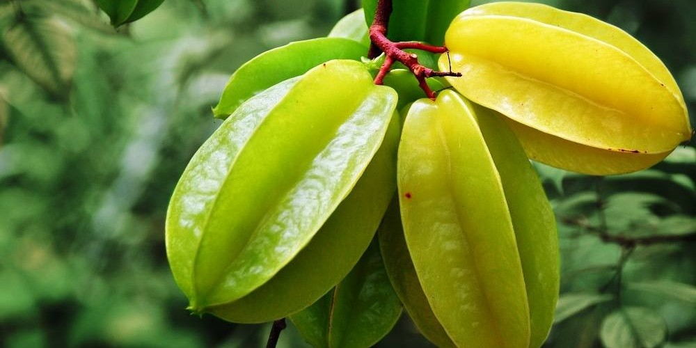 Amazing benefits of starfruit