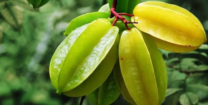Amazing benefits of starfruit