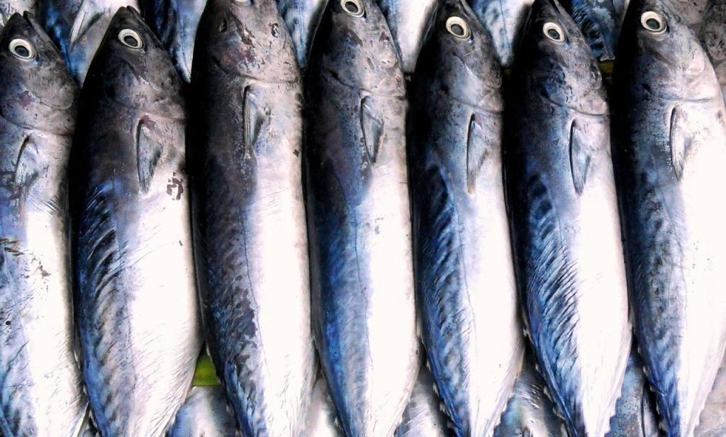 Health benefits of tuna
