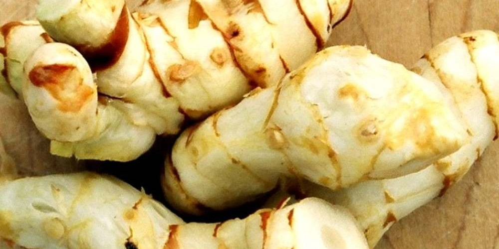 Health benefits of Galangal