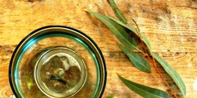 Health benefits of Eucalyptus oil