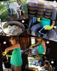 making goats milk soap