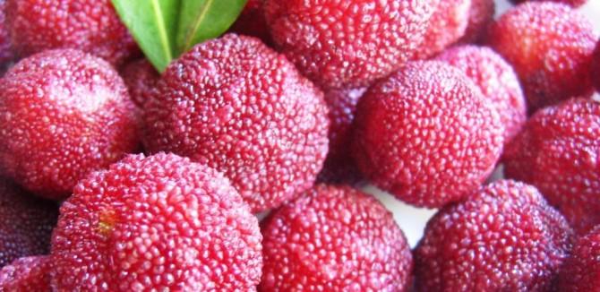 Yum, yum, yumberry health benefits