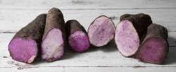 purple taro root