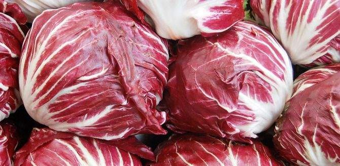 Health Benefits of Radicchio