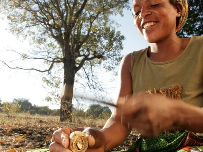 Benefits of this Africian Nut – Mongongo
