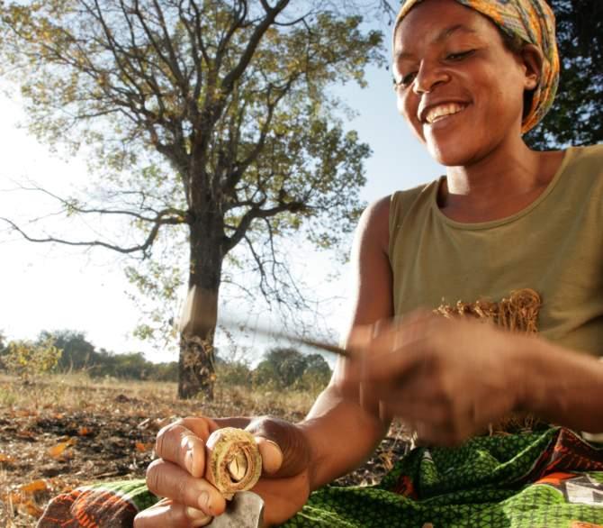 african woman cracking mongongo nut