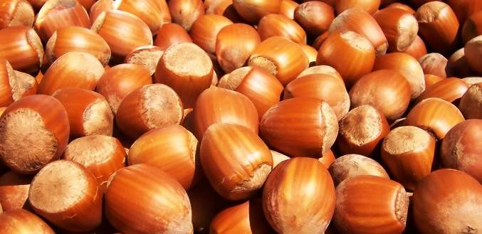 Are Hazelnuts Healthy?
