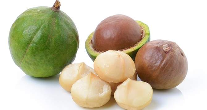 13 Amazing benefits of Macadamia nuts for health