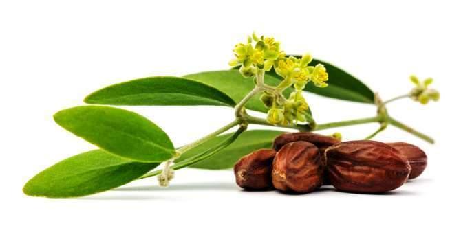 health benefits of jojoba oil