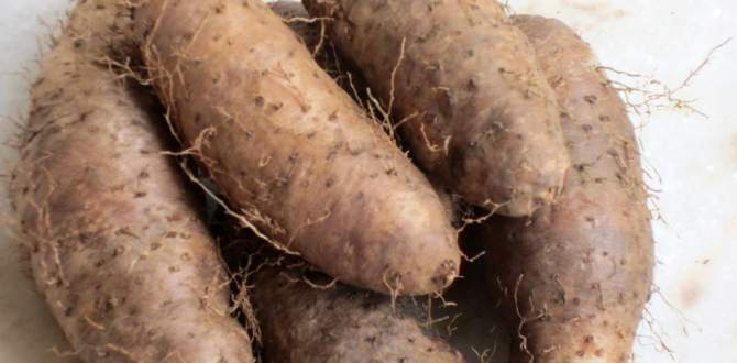 12 health benefits of yam