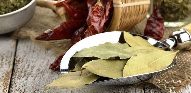 Bay leaves to keep diseases at bay