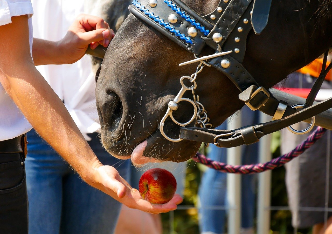 Nutrition Does a Horse