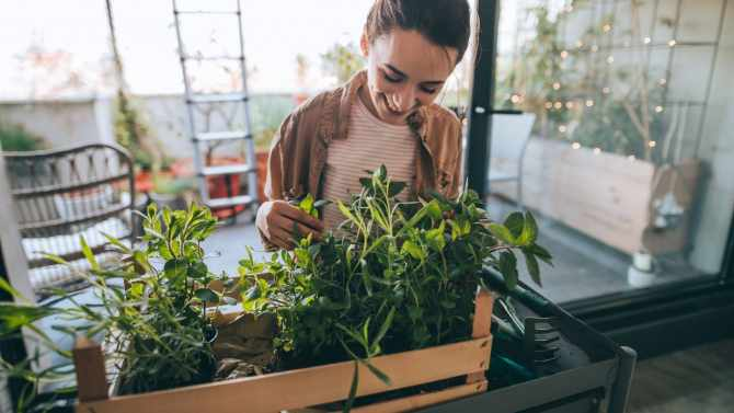 Green Tips to Improve Your Health and Lifestyle