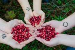 Top 16 Reasons to Define What Is Cranberry Juice Good For