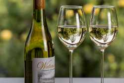 Dry White Wine Types, Best Brands, Features, and Foods to Pair With
